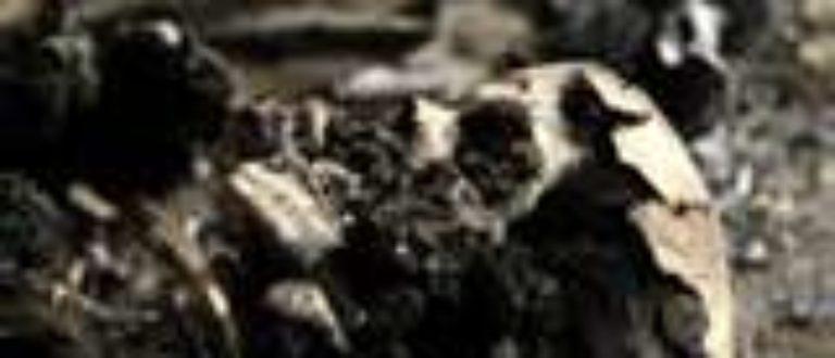 Article : Découverte macabre à tripoli